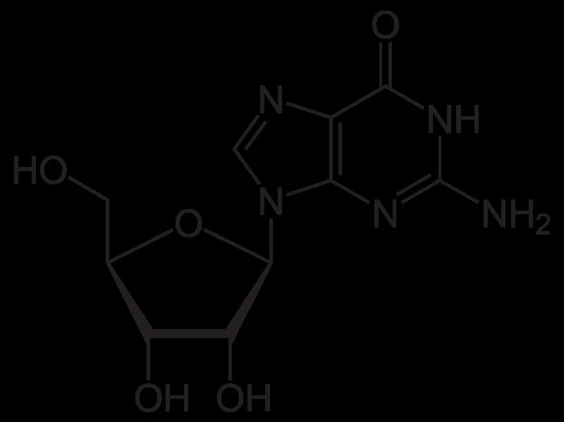 Key Difference - Guanine vs Guanosine