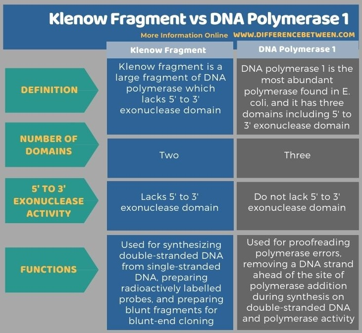 Difference Between Klenow Fragment and DNA Polymerase 1 in Tabular Form
