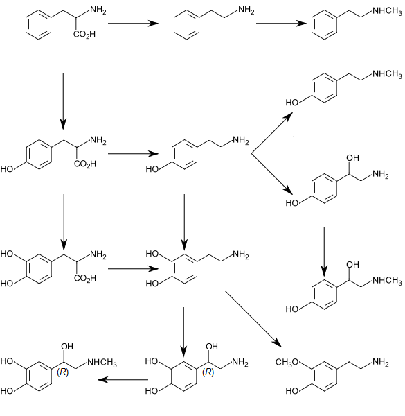 Difference Between L-phenylalanine and DL-phenylalanine