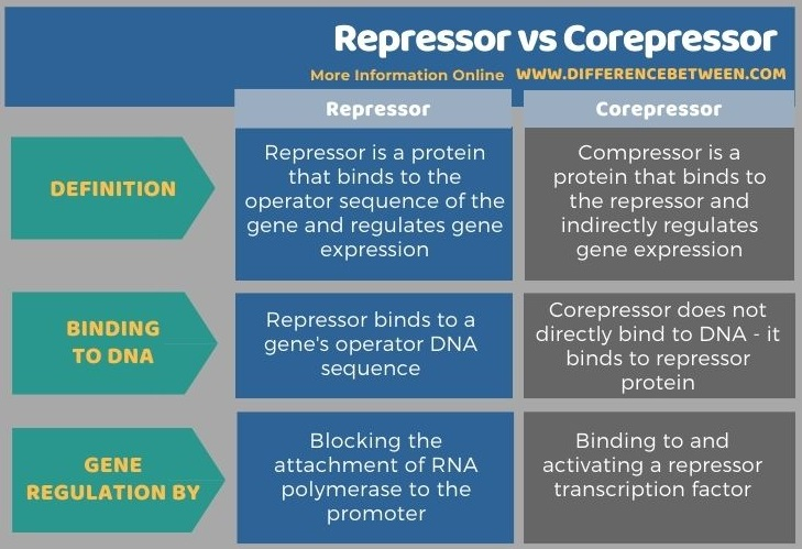 Difference Between Repressor and Corepressor in Tabular Form