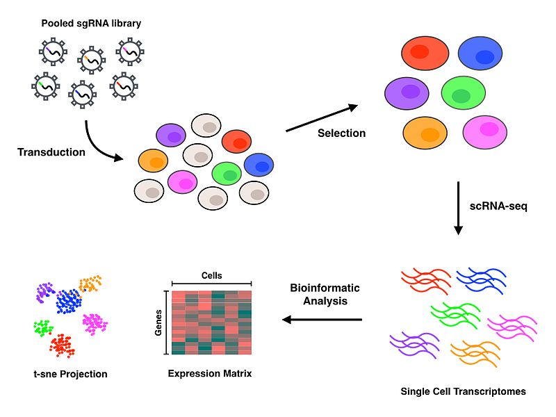 Difference Between Structural and Functional Genomics