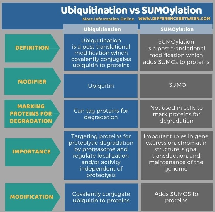 Difference Between Ubiquitination and SUMOylation in Tabular Form