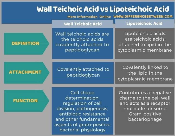 Difference Between Wall Teichoic Acid and Lipoteichoic Acid in Tabular Form