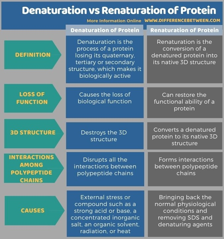Difference BetweenDenaturation and Renaturation of Protein in Tabular Form
