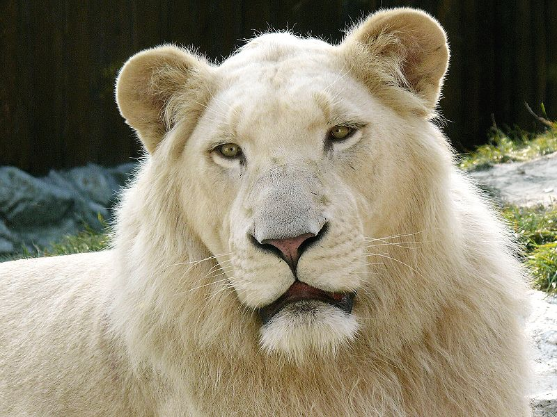Difference Between Albinism Melanism and Leucism