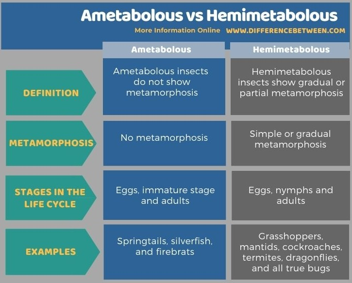 Difference Between Ametabolous and Hemimetabolous in Tabular Form