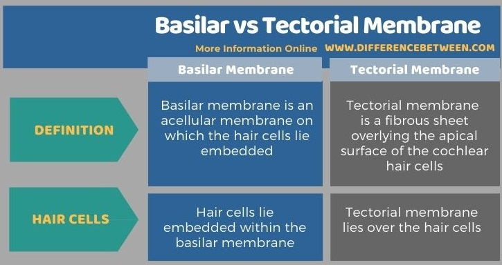 Difference Between Basilar and Tectorial Membrane in Tabular Form