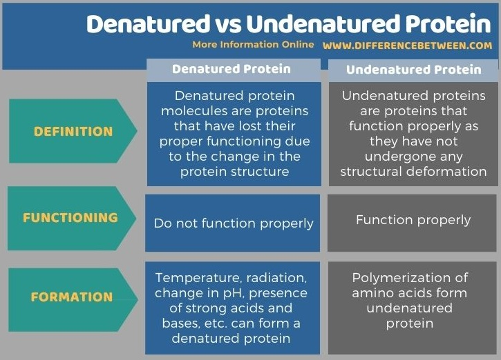Difference Between Denatured and Undenatured Protein in Tabular Form