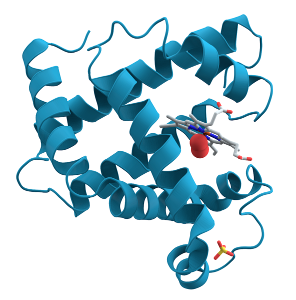 Key Difference - Denatured vs Undenatured Protein