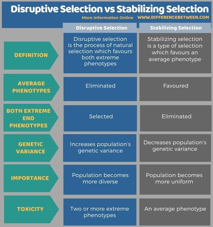 Difference Between Disruptive Selection and Stabilizing Selection in Tabular Form