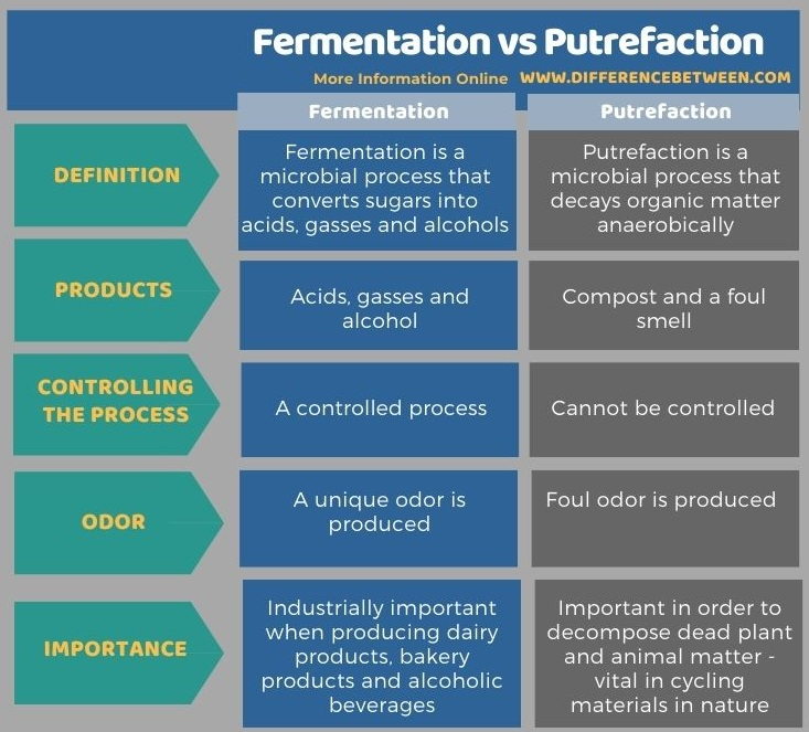 Difference Between Fermentation and Putrefaction in Tabular Form