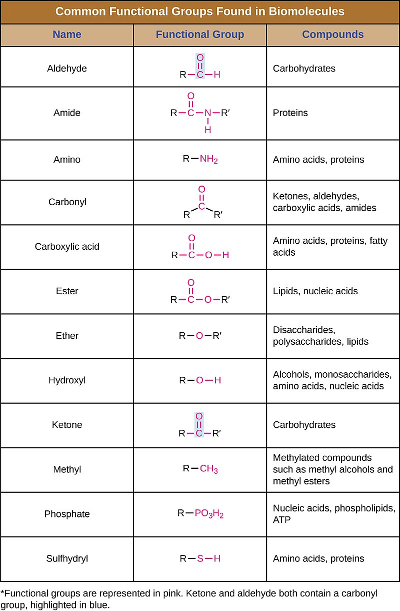 Difference Between Functional Group and Homologous Series
