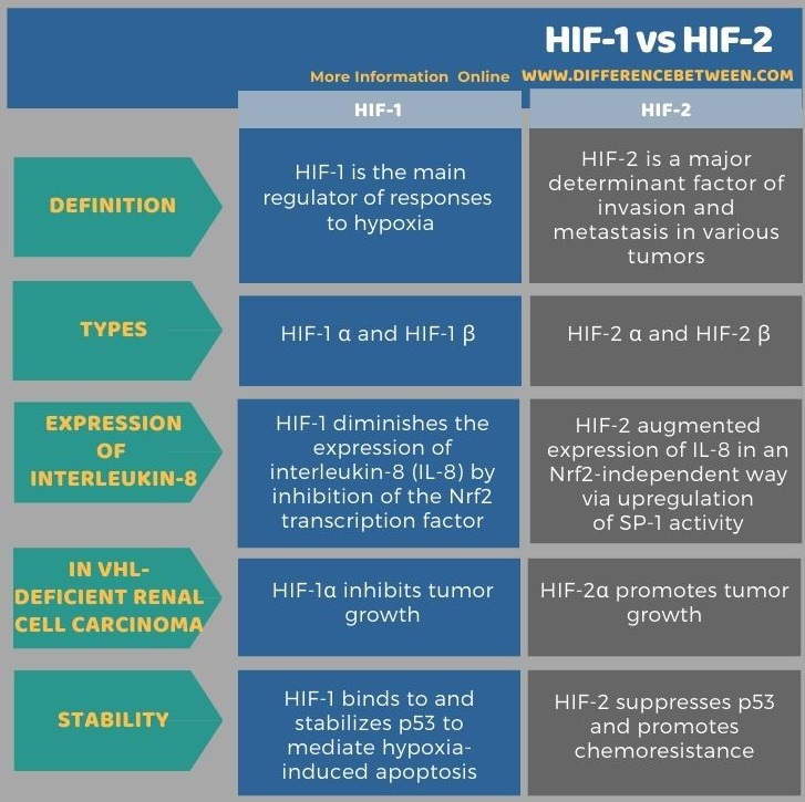 Difference Between HIF-1 and HIF-2 in Tabular Form