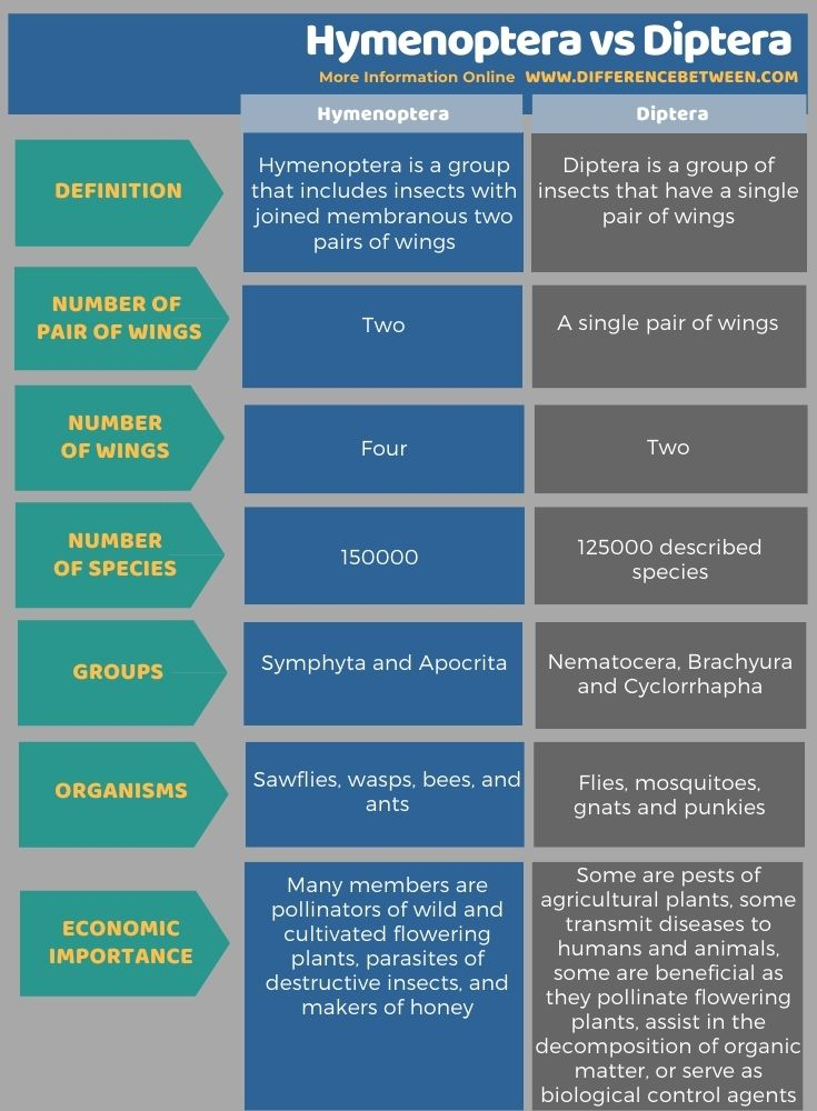 Difference Between Hymenoptera and Diptera in Tabular Form