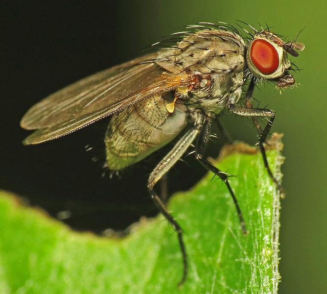 Key Difference - Hymenoptera vs Diptera