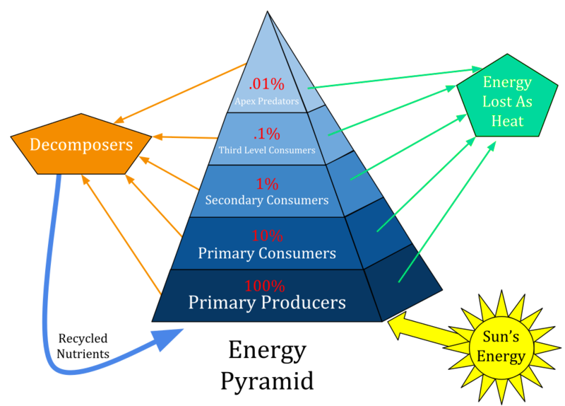 Difference Between Pyramid of Biomass and Pyramid of Energy