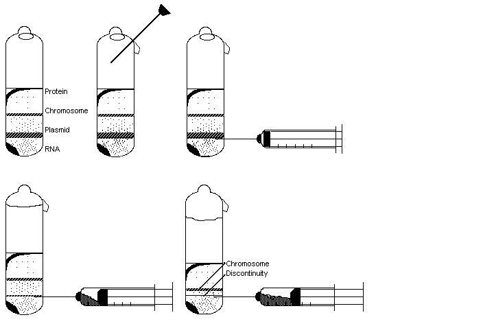 Difference Between Sucrose Gradient and Sucrose Cushion Ultracentrifugation
