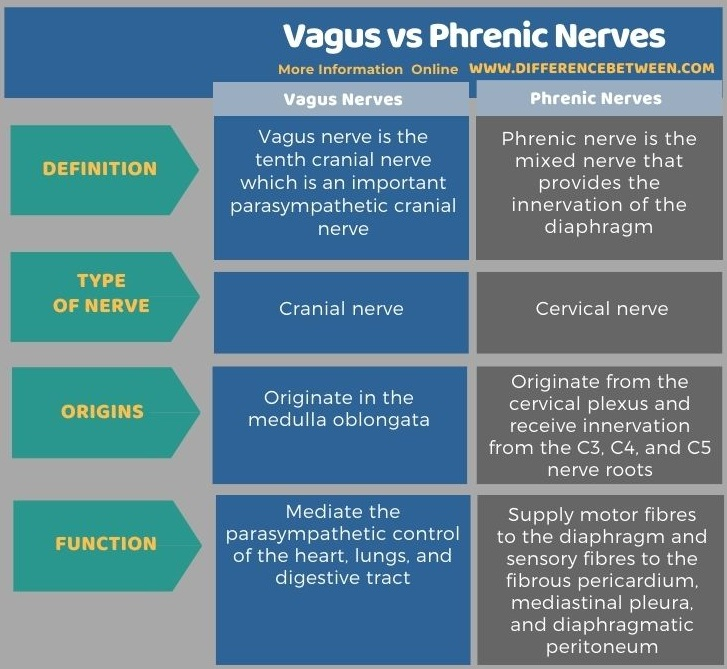Difference Between Vagus and Phrenic Nerves in Tabular Form