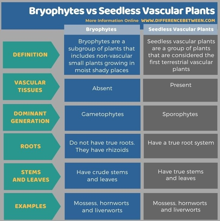 Difference Between Bryophytes and Seedless Vascular Plants in Tabular Form