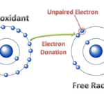 Difference Between Electropositive and Electronegative Radicals