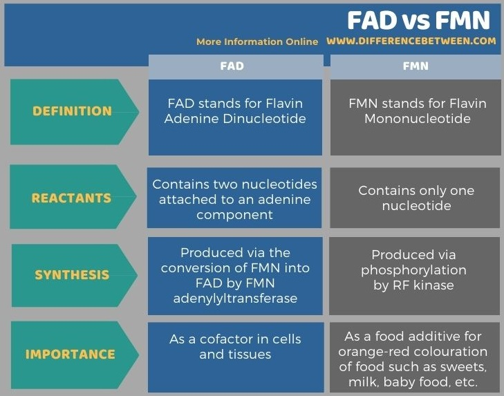 Difference Between FAD and FMN in Tabular Form