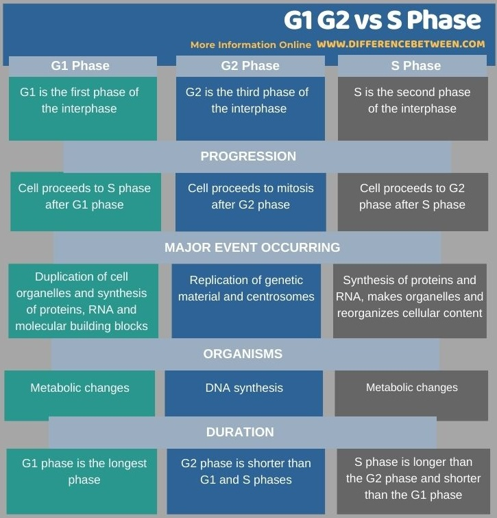 Difference Between G1 G2 and S Phase in Tabular Form