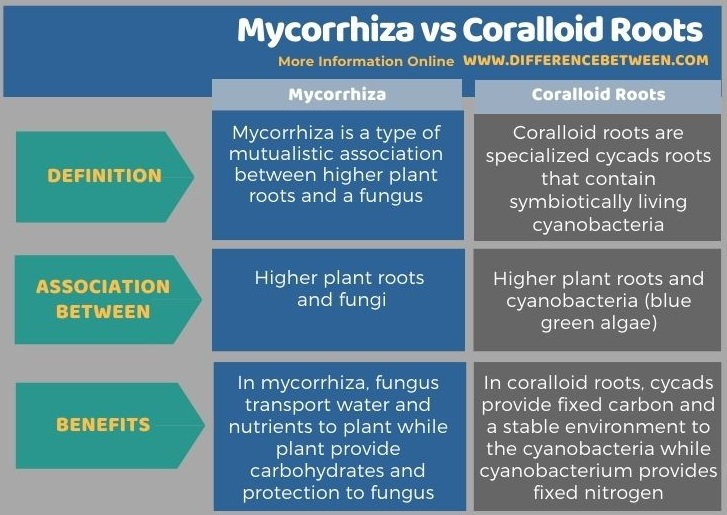 Difference Between Mycorrhiza and Coralloid Roots in Tabular Form