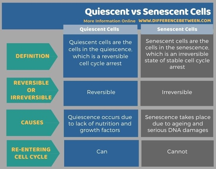 Difference Between Quiescent and Senescent Cells in Tabular Form