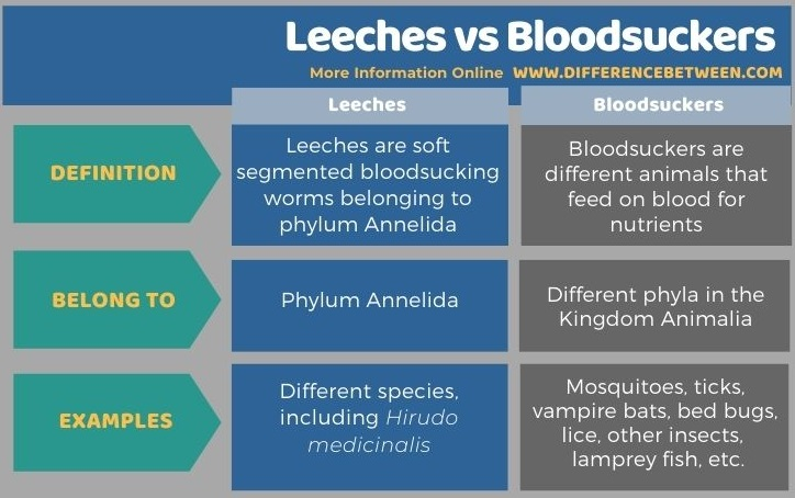 Difference Between Leeches and Bloodsuckers - Tabular Form