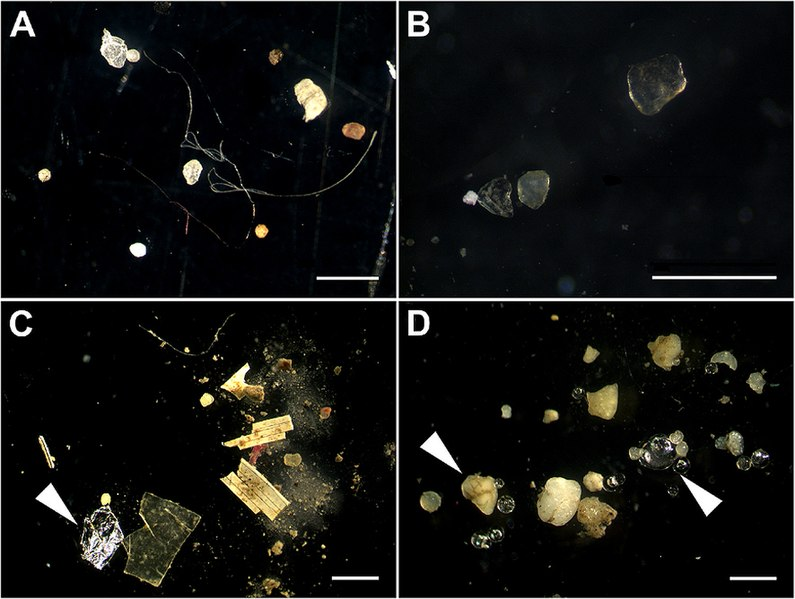 Difference Between Microplastics and Nanoplastics
