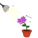 Difference Between Positive and Negative Tropism