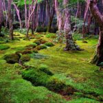 Difference Between Sphagnum Moss and Sheet Moss