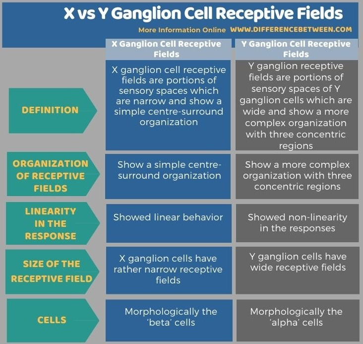 Difference Between X and Y Ganglion Cell Receptive Fields - Tabular Form