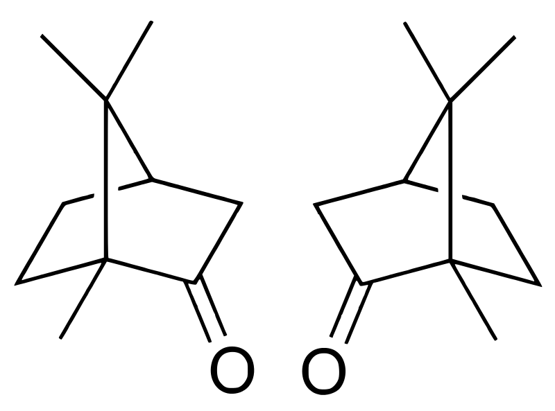 Key Difference - Camphor vs Menthol