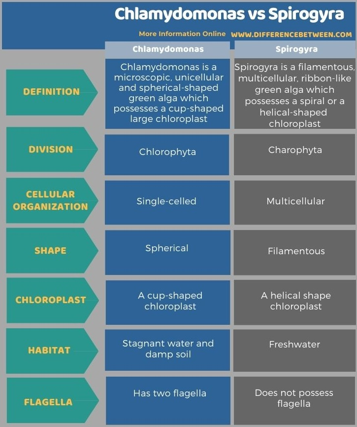 Difference Between Chlamydomonas and Spirogyra in Tabular Form