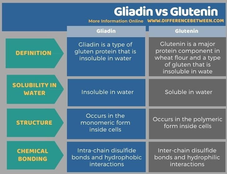 Difference Between Gliadin and Glutenin in Tabular Form