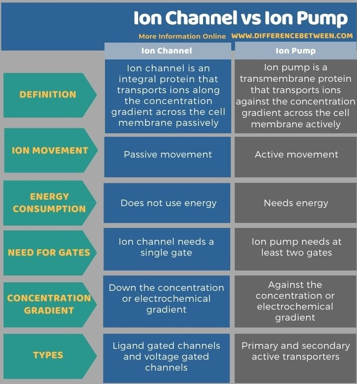 Difference Between Ion Channel and Ion Pump in Tabular Form
