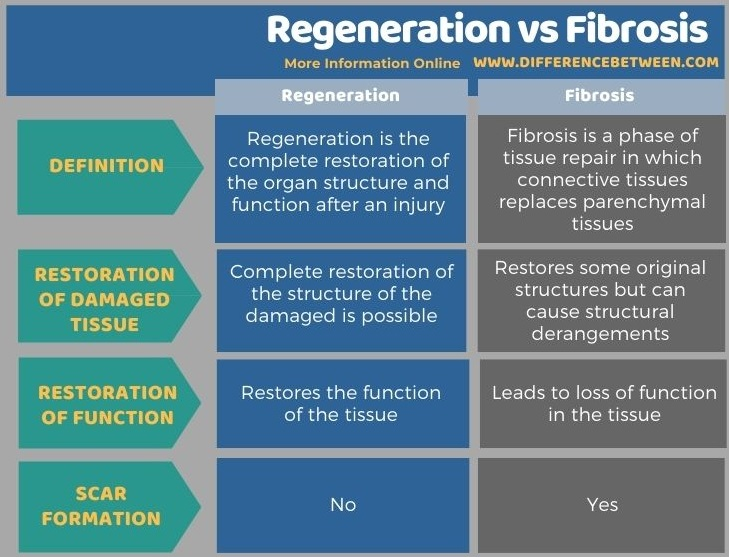 Difference Between Regeneration and Fibrosis in Tabular Form