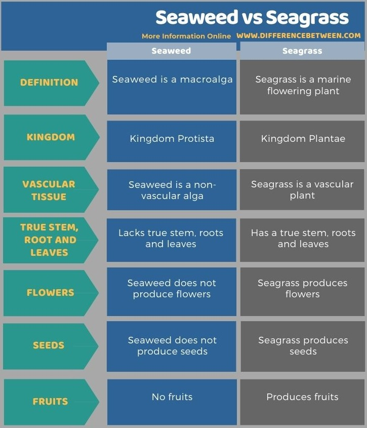 Difference Between Seaweed and Seagrass in Tabular Form