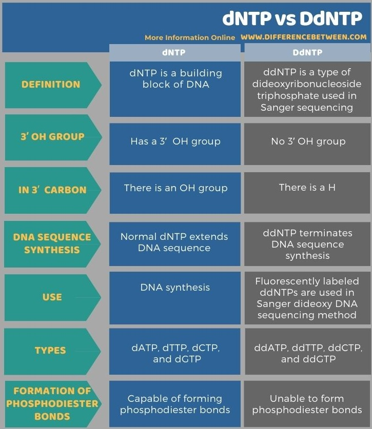 Difference Between dNTP and DdNTP in Tabular Form