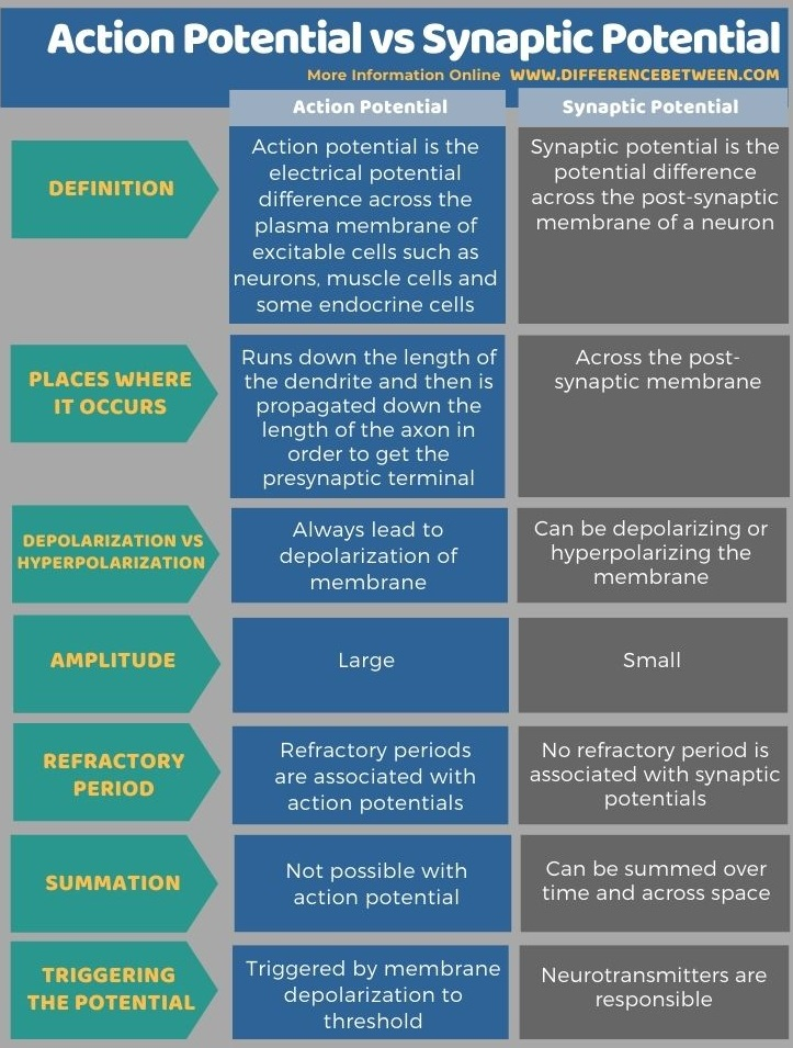 Difference Between Action Potential and Synaptic Potential in Tabular Form