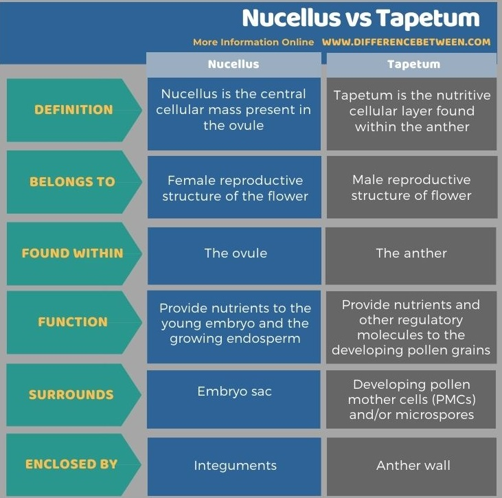 Difference Between Nucellus and Tapetum in Tabular Form