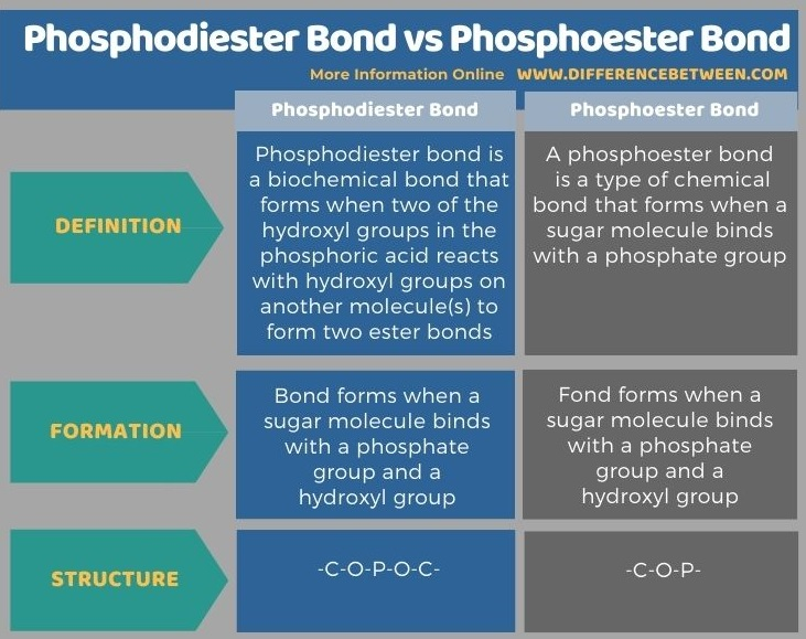 Difference Between Phosphodiester Bond and Phosphoester Bond in Tabular Form