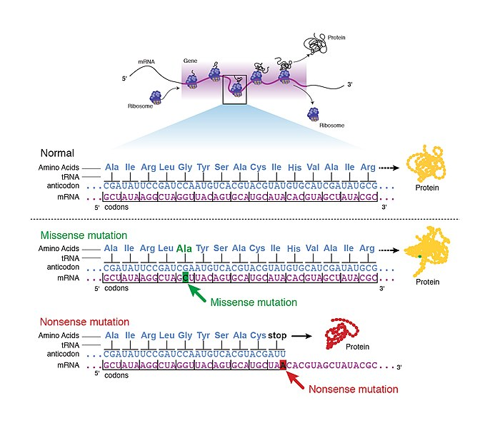 Key Difference - Reversion Mutation vs Suppression Mutation