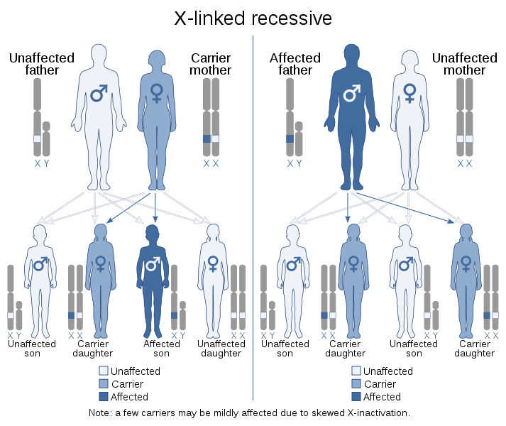 Key Difference - X Linked Dominant vs X Linked Recessive