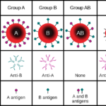 Difference Between ABO and Rh Blood Grouping System