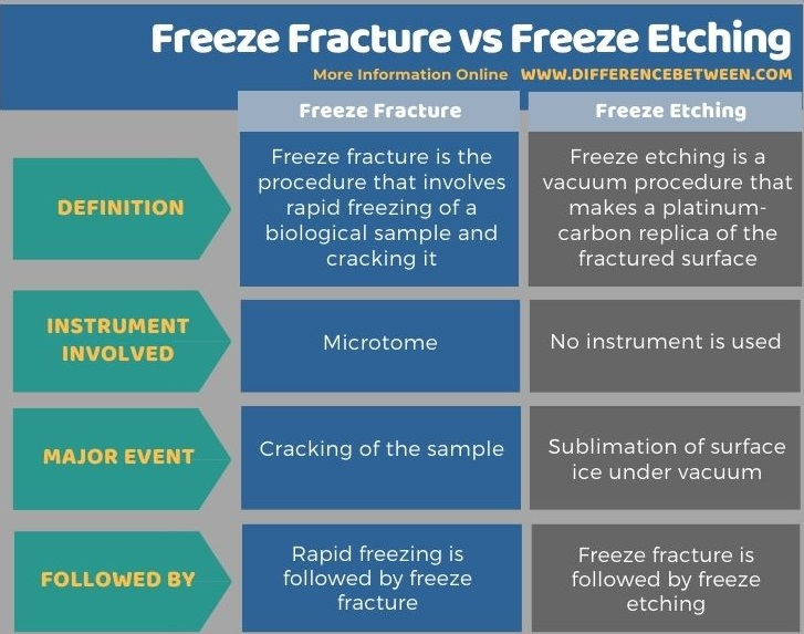 Difference Between Freeze Fracture and Freeze Etching in Tabular Form
