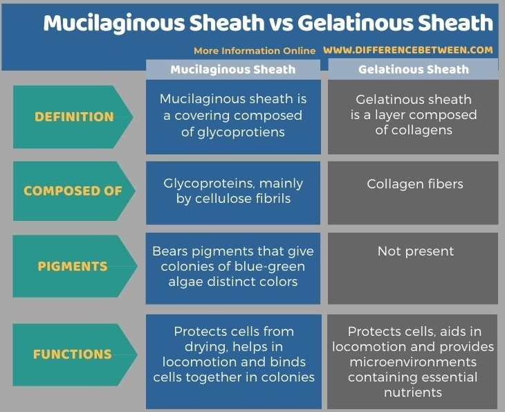 Difference Between Mucilaginous Sheath and Gelatinous Sheath in Tabular Form