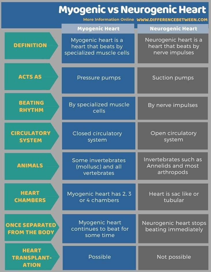 Difference Between Myogenic and Neurogenic Heart in Tabular Form