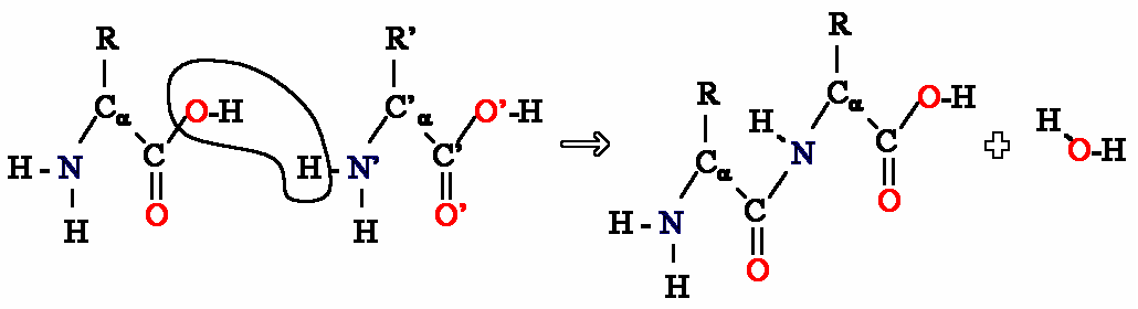 Key Difference - Nylon vs Polyamide